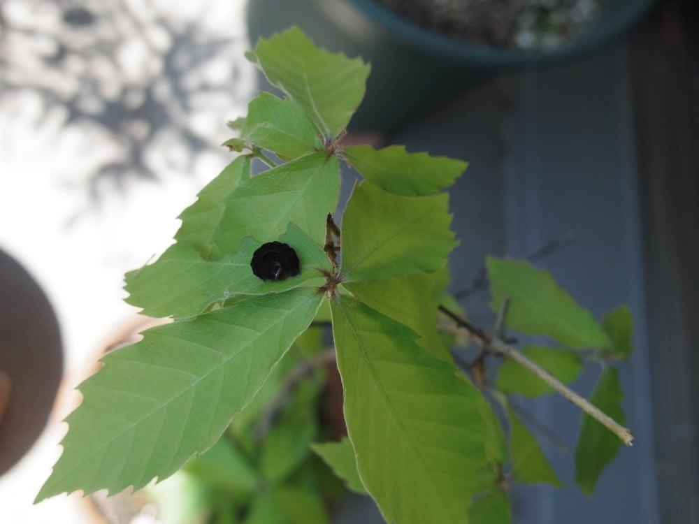 どんぐりの葉と虫