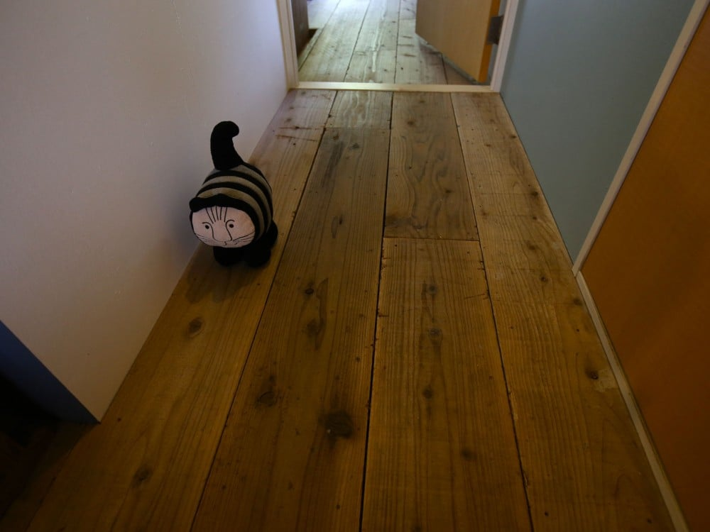 廊下を歩く猫のぬいぐるみ(STOTA KATTEN)