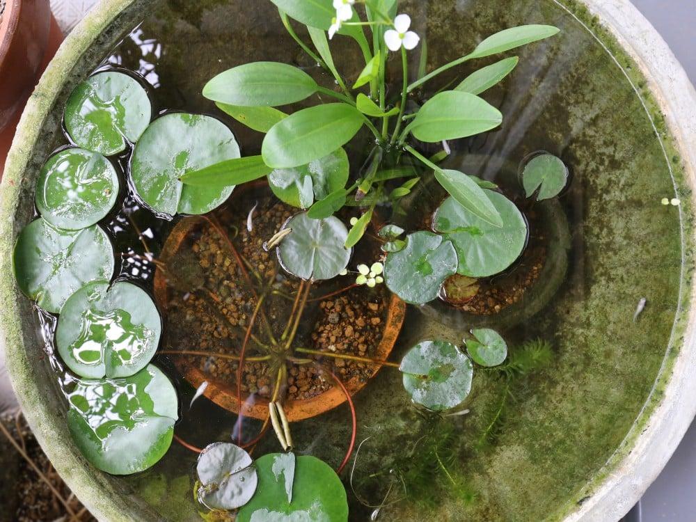水鉢の様子