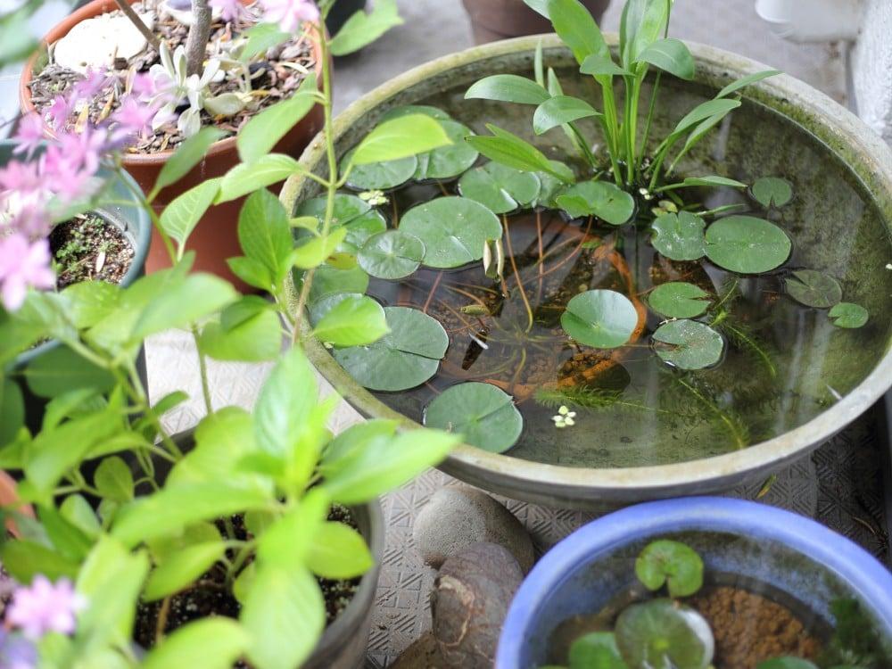 モルタルと焼物のスイレンの水鉢