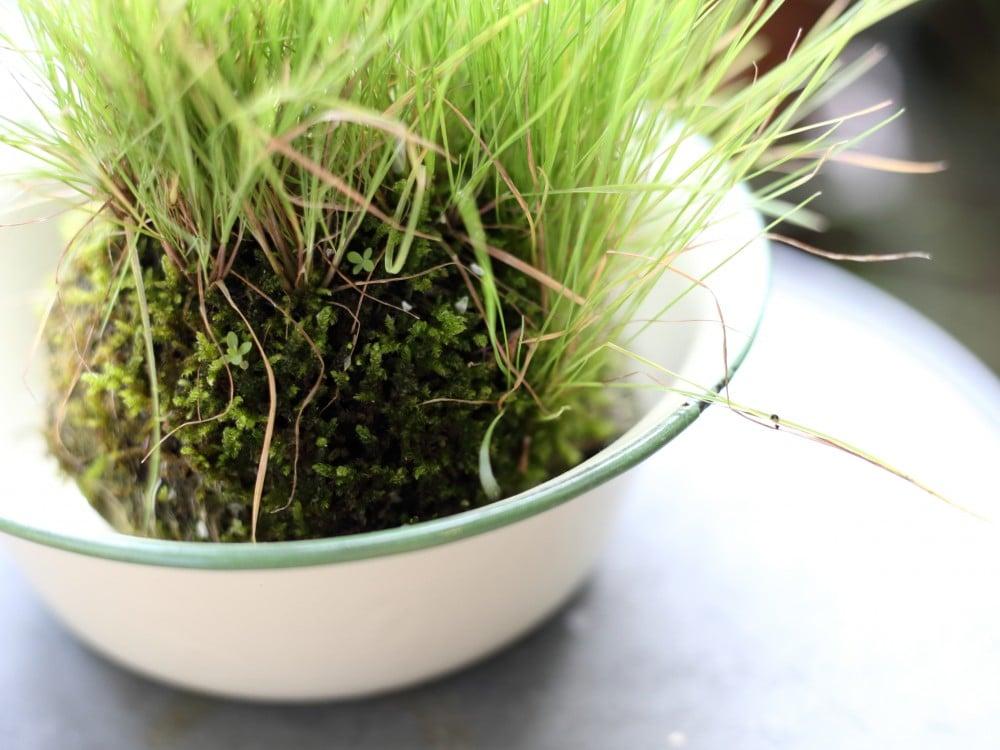 苔玉に付いた雑草
