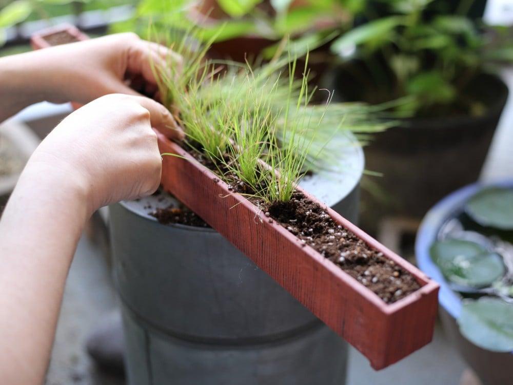 鉢で田植え