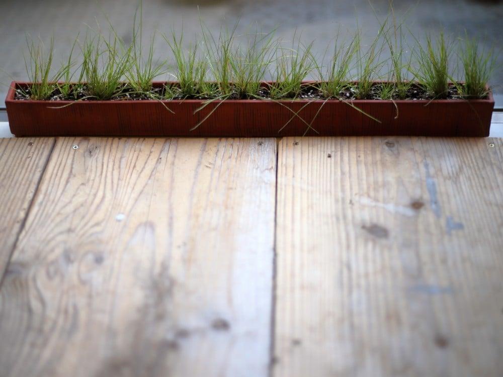 草の植え付けが終わった横長の鉢