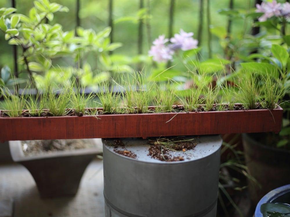 横長の鉢に草を植えたところ