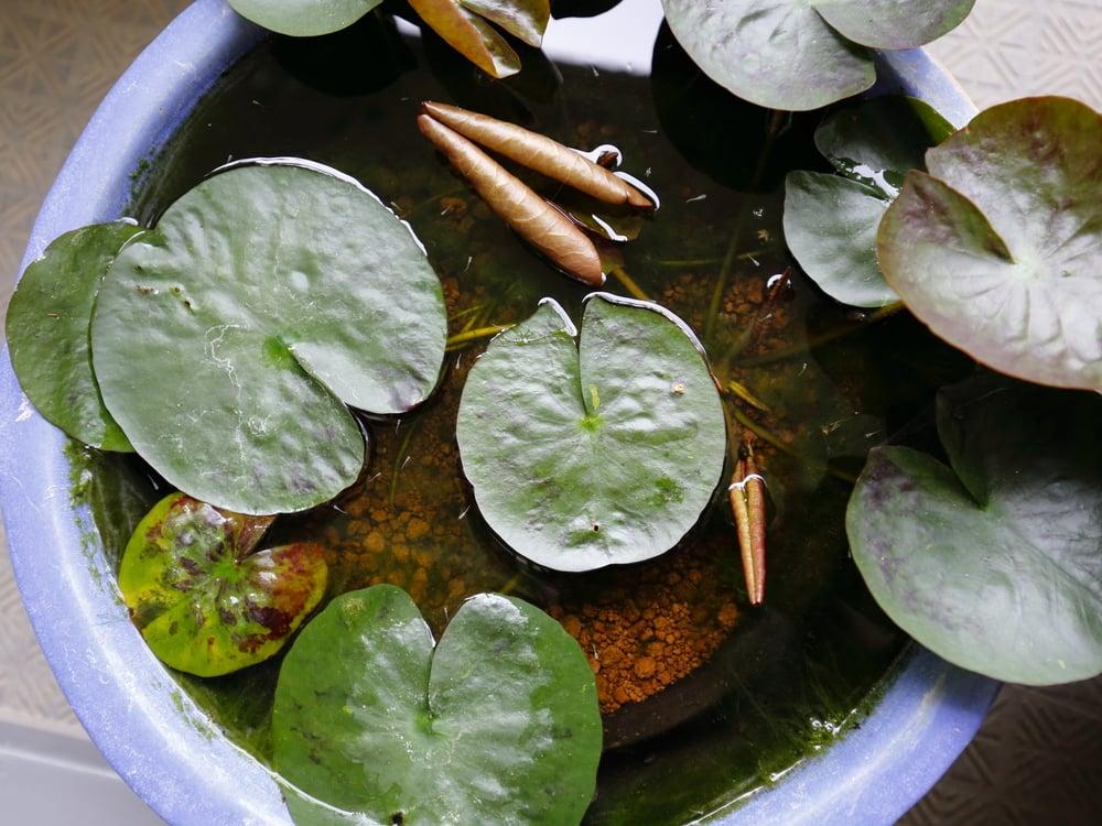 小さい方の水鉢