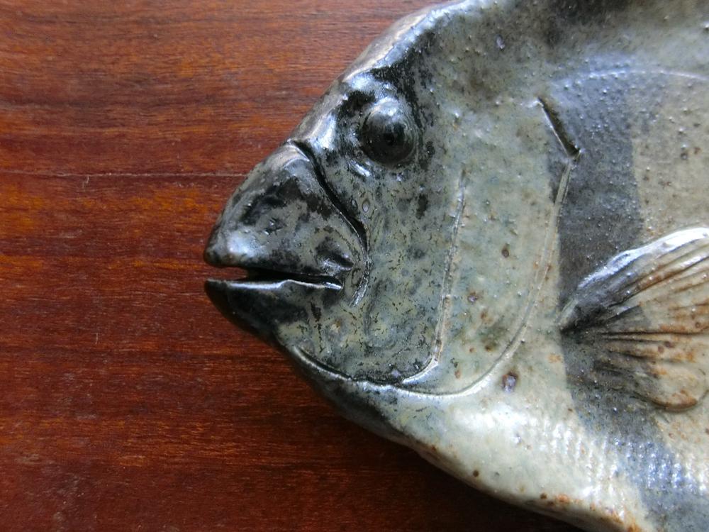 口の形も、目も鯛とは違います。