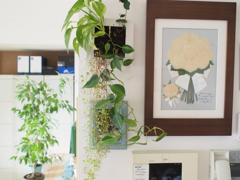 1年反語の植物の様子