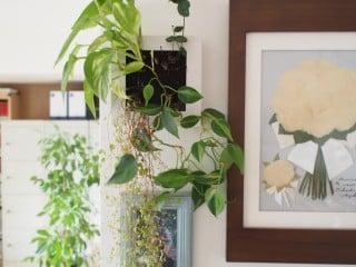 テレビボード チェスト 観葉植物造花 IKEA ニトリ 無印良品 - 杉並区
