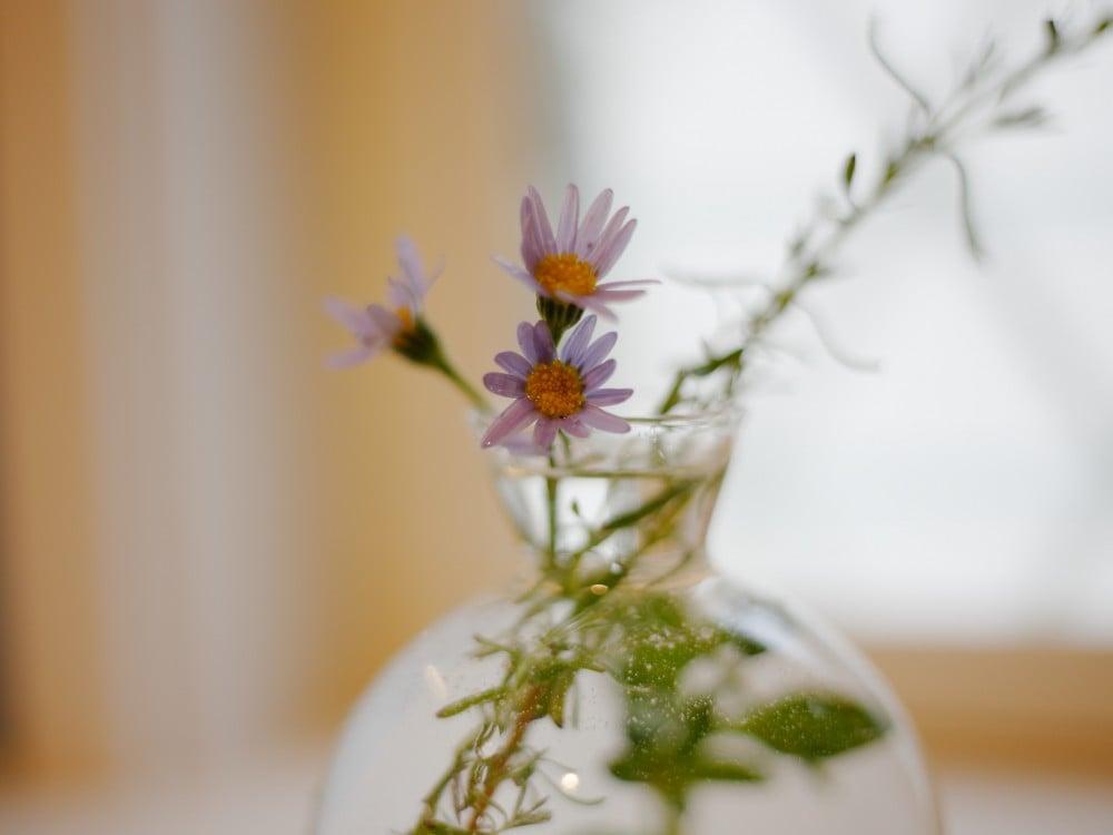 庭で摘んだお花をインテリアに